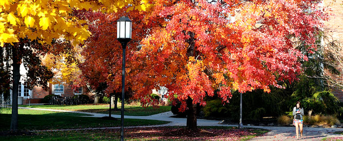 Student walking under a tree with vibrant fall colors.