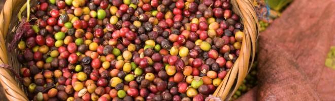 Nicaragua-Coffee-Basket-660x200