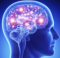 brain_image_web