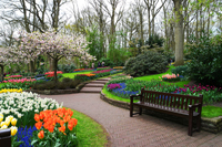 The Keukenhof Gardens in Lisse, the Netherlands