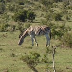 South Africa Trip 2007