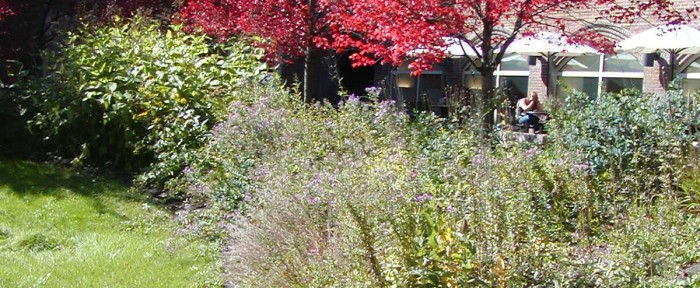 Native Prairie Garden